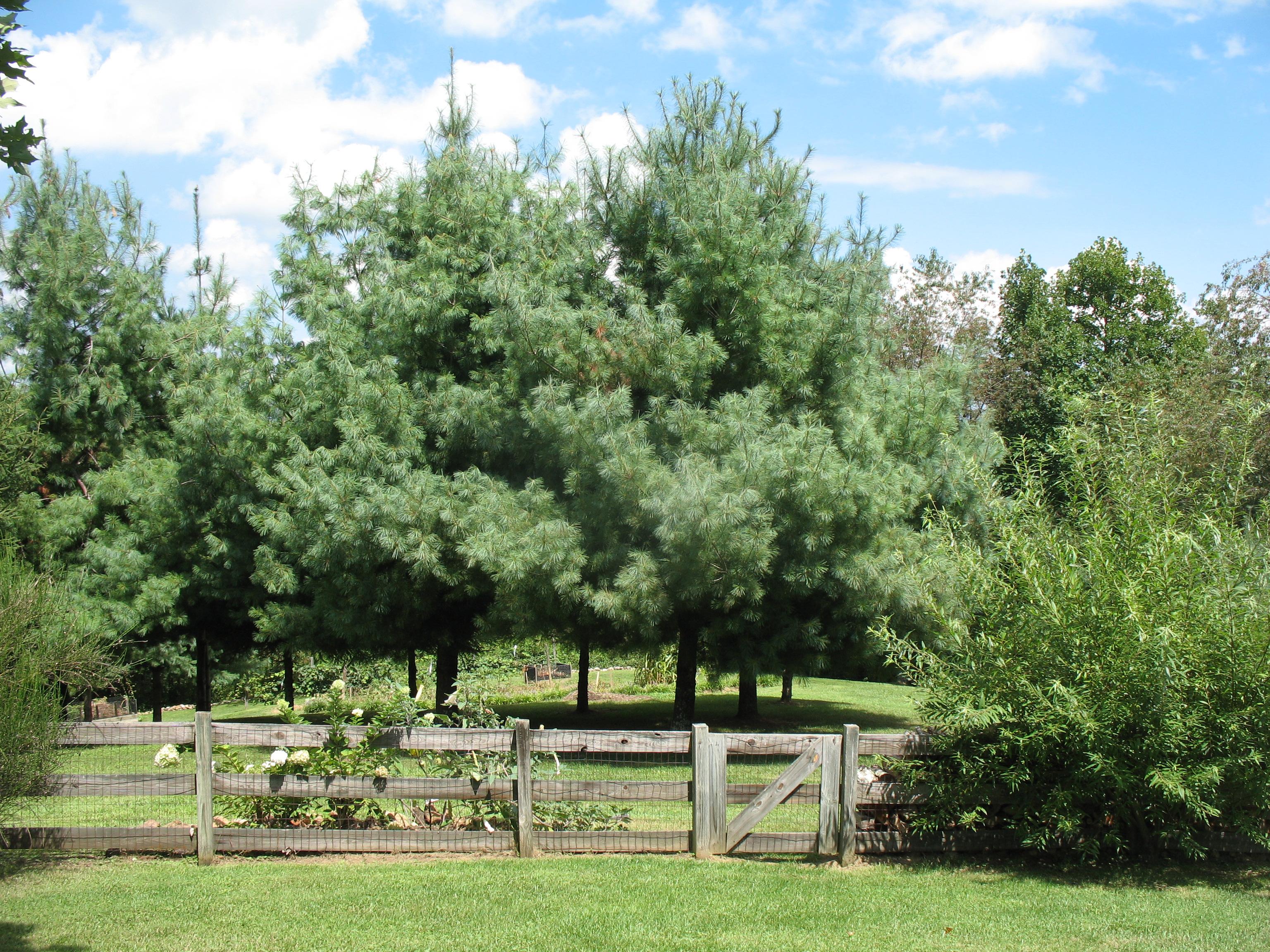 Food Plot Fruit Trees
