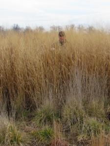 Real World Switchgrass