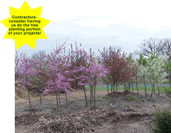 The Trees You Are Looking For At A Fair Price Remember If Your Project Involves Planting We Can Help Or Do It